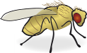 Drosophila.png