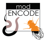 modENCODE Project Openings