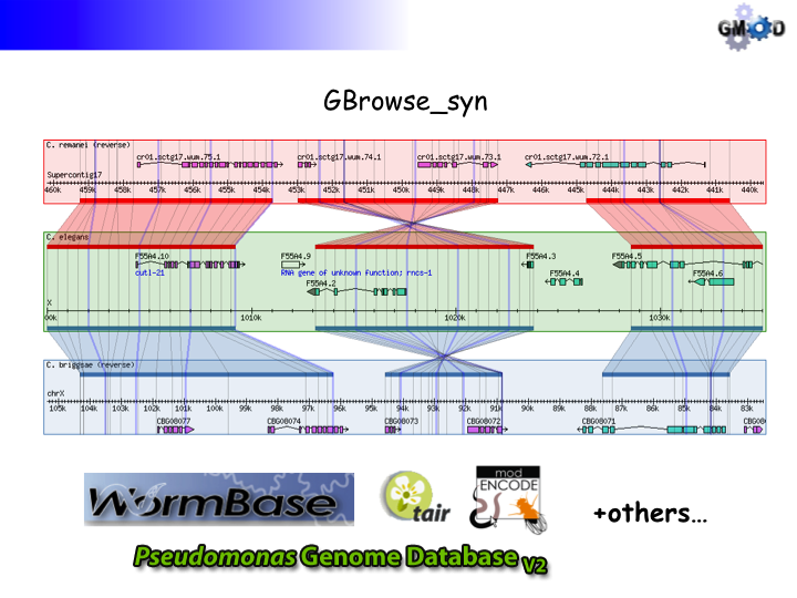 GBrowse synSlide7.png
